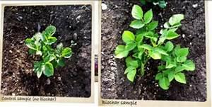Biochar - carbon capture technology in your garden