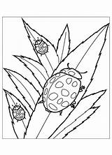Coloring Insects Pages Bug Ladybug Lady Leaves Flying Squirrel Leaf Beetle Eating Animal Drawing Bugs Insect Printable Colouring Sheets Adult sketch template
