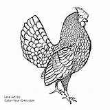 Rooster Chicken Coloring Sebright Pages Line Chickens Adult Hen Decal Clipart Clip Custom Patterns Own Printable Embroidery Library Burning Wood sketch template