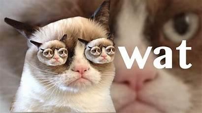 Cat Grumpy Wallpapers Meme Desktop Quotes Second