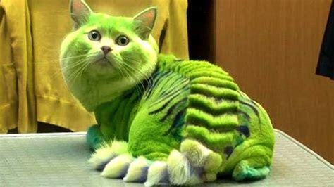 cat most breeds dangerous