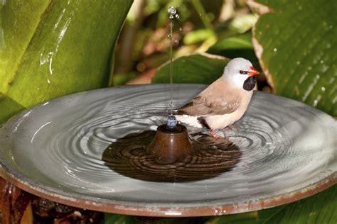 vogeltränke selber bauen vogeltr 228 nke selber machen tipps zum bau gartendekoration garten