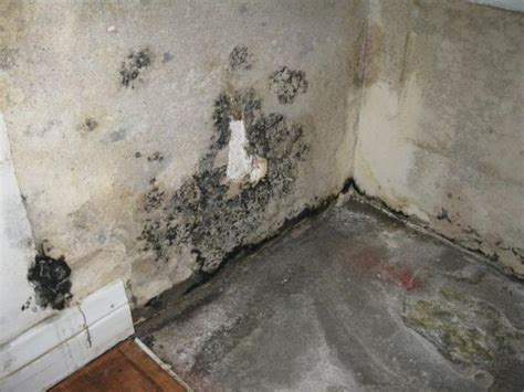 Download Black Mold Under Wallpaper Gallery. Living Room Coffee And End Tables. Living Room Built In Units. Best Gray Paint For Small Living Room. Wallpaper For Living Room Wall India. Modern Decorating Living Room. Living Room Fireplaces Ideas. Small Living Room Ideas With Brown Couch. Pictures Of Coastal Living Rooms