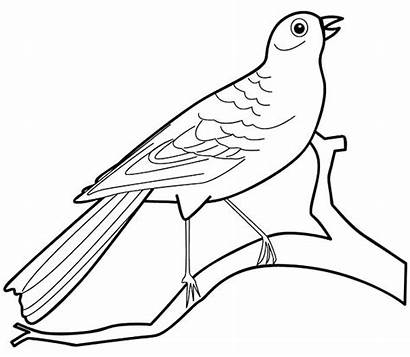 Coloring Bird Pages Preschool Canary Birds Colouring