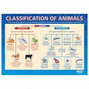 The Animal Kingdom Classification Chart