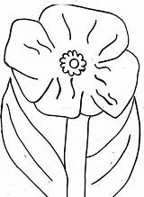Poppy Coloring Flower California Pages Blossom Clipart Library Popular Line sketch template