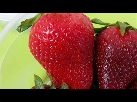 HOW TO PROPERLY DIP CANDIED STRAWBERRIES - YouTube ...