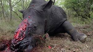 Petition, U00b7, Petition, To, End, The, Trade, Of, Exotic, Animals, In