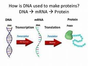 Mrna And Dna Mutation