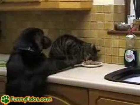 dog caught stealing cats food youtube