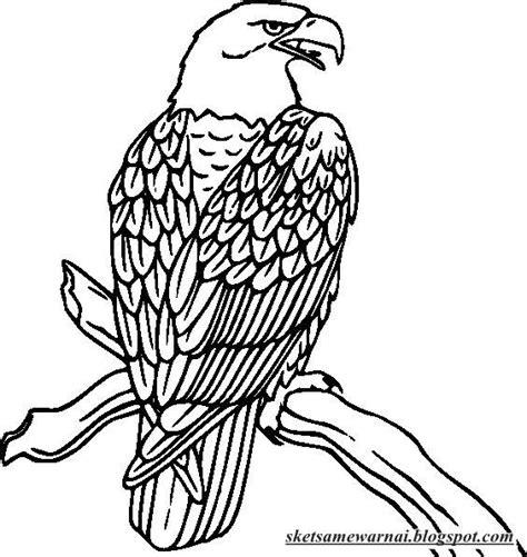 sketsa mewarnai gambar burung elang