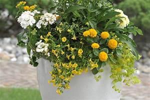 Herbstblumen Für Kübel : sommerblumen f r den k bel ~ Buech-reservation.com Haus und Dekorationen