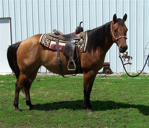 horses cutting bit