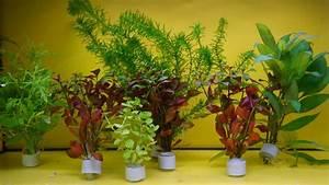 Pflanzen Für Aquarium : aquariumpflanzen einpflanzen und pflegen aquarienportal ~ Buech-reservation.com Haus und Dekorationen