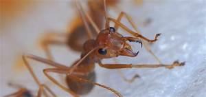 Wie Bekämpfe Ich Ameisen : wie kann ich ameisen in meinem haus loswerden mausklick ~ Whattoseeinmadrid.com Haus und Dekorationen