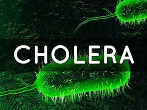 Cholera  Malaria   U0026 Polio By Nazareth Lopez