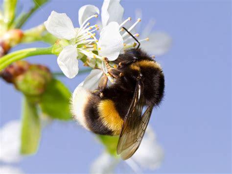 rid  bumble bees easily  methods