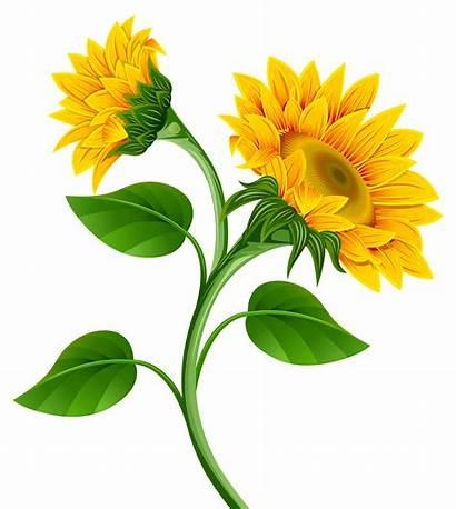 Clipart Girassol Sunflowers Montagens Digitais Linkedin