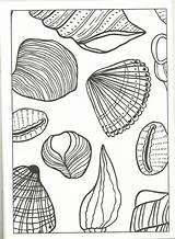 Coloring Seashell Sea Shells Artwork Abstract sketch template