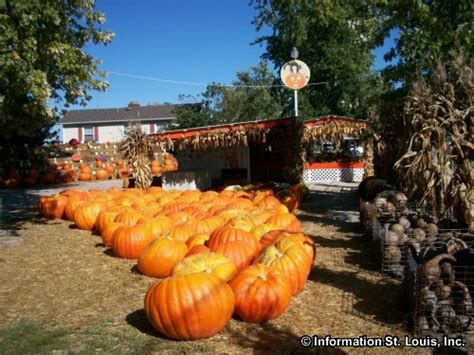 Pumpkin Patch St Louis Mo by Pumpkin Patch Saint Louis Developerskick