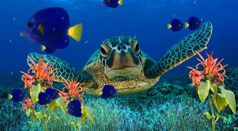 3d Animated Fish Wallpaper - animated aquarium wallpaper