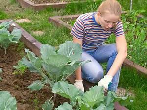 Désherber Avec Du Vinaigre : desherbant vinaigre blanc herbicide maison litres de ~ Melissatoandfro.com Idées de Décoration
