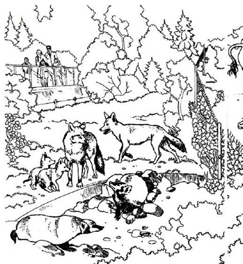 wolves    wild animals   zoo coloring pages