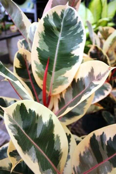 1000+ Images About Potted Plants On Pinterest