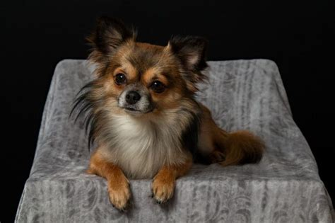 cutest   small dog breeds perfect