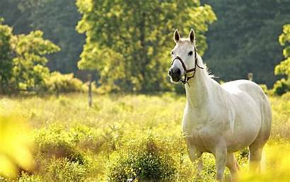 Horse Cool Backgrounds Animal Android