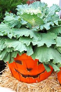 Large Outdoor Fall Planter Ideas with Pumpkins