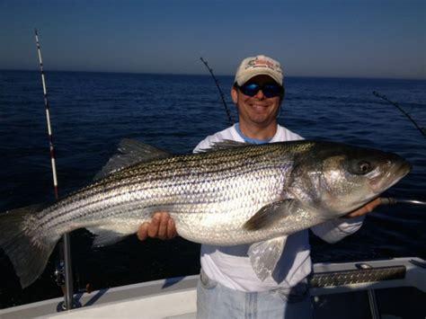 Virginia Striper Fishing