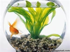 aquarium poisson archives page 7 of 15 poisson naturel