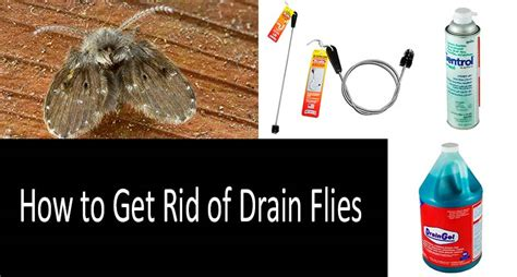top   drain fly killers  buyers guide
