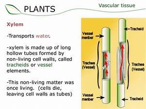 02 Plant Structure Supplement