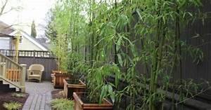 Bambus Vernichten Tipps : bambus in holzk beln pflanzen tipps zur pflege garten pinterest holzk bel bambus und pflege ~ Whattoseeinmadrid.com Haus und Dekorationen