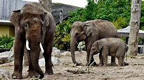 Chester Zoo - Places to go | Lets Go With The Children