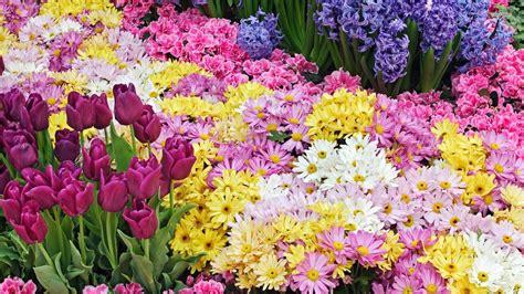 Spring Flowers Desktop Wallpaper
