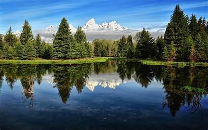 Forest Pine Backgrounds Nature Pixelstalk Beauty