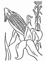 Corn Plant Coloring Cob Mature Drawing Pages Template Getdrawings Sun Sketch Button Using Print sketch template