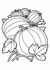 Melon Toamna Coloring Coloriage Colorat Desene Colorir Fruits Colorear Planse Calabazas Dibujos Desenhos Cu Imprimir Cantaloupe Alimentos Colorier Pumpkin Hugolescargot sketch template