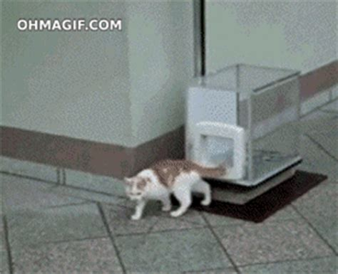 cat kitty gif find share  giphy