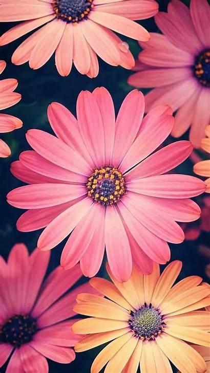 Flores Flowers Flower Fondos Iphone Background Zedge