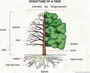 Every Tree For Itself  U2013 Extras