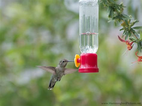 hummingbird feeders hummingbird pictures