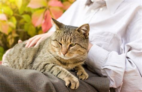 Therapy Cats: How To Train Your Feline To Be One