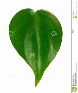 Single Green Leaf Stock Photo - Image: 7525790