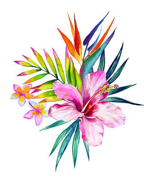 Pink Flamingo Tattoo Designs tropical flower illustrations royalty  vector 459 x 612 · jpeg