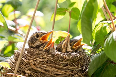 How To Keep Cats Out Of Bird Nests