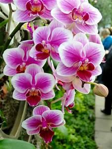 Schöne Orchideen Bilder : orchideen pflegen und reiche sch ne bl ten zu hause bewundern ~ Orissabook.com Haus und Dekorationen